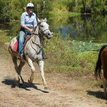 Green Island Tours – Green Island and Horse Riding