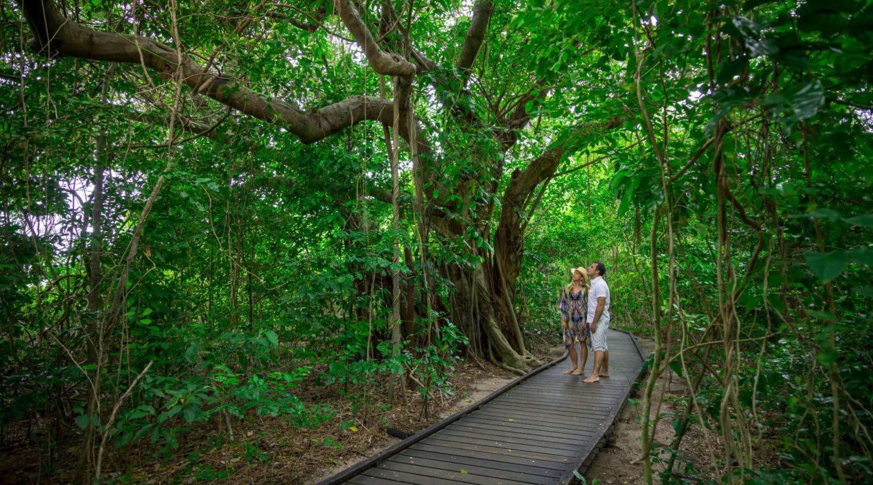 Green Island Rainforest