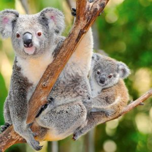 Green Island Attractions, join one of our Green Island tour packages to see some of our best attractions, a chance to cuddle a koala