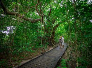 Green Island for Kids