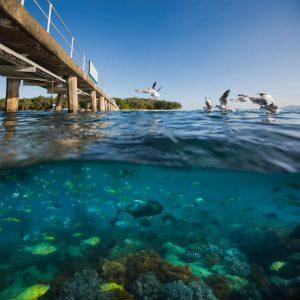 Cairns Green Island