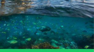 Green Island Traveller Information
